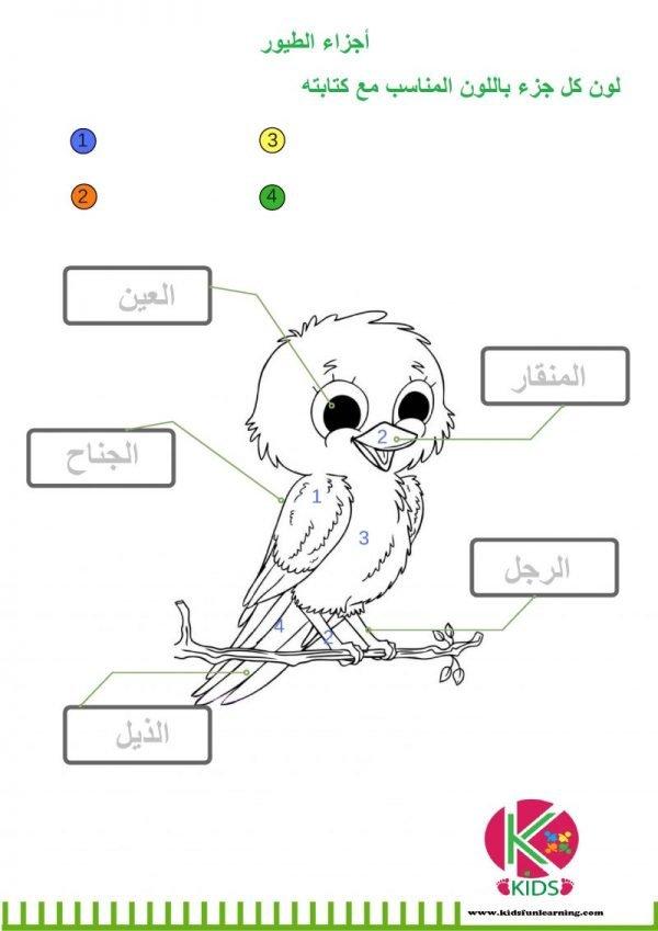 تعليم الطيور للأطفال